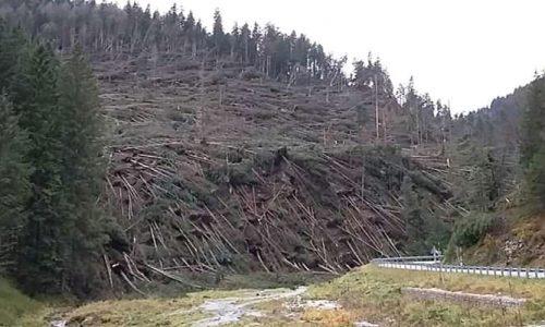 Piantiamo nuovi alberi nei boschi veneti